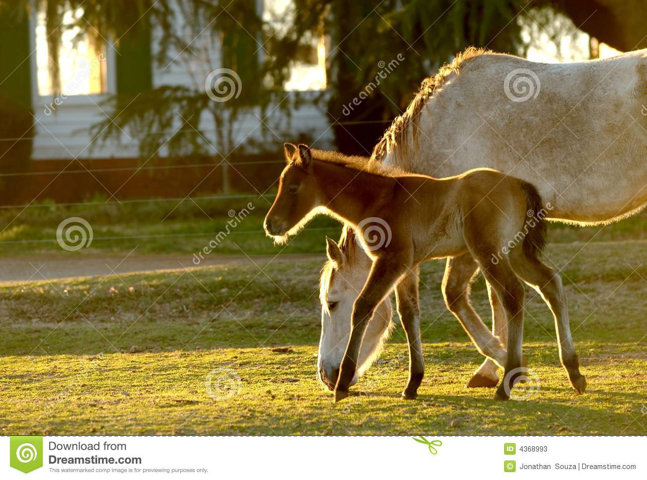 Young Foal with mom 02