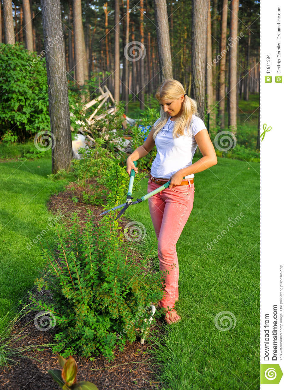 Young Gardening Woman Trimming Plant In The Garden Stock