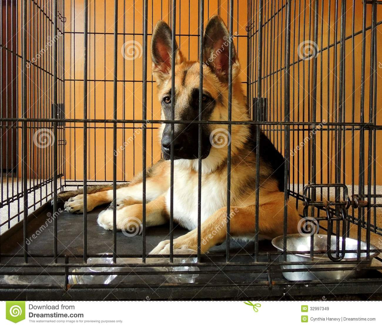 how to crate train a german shepherd puppy