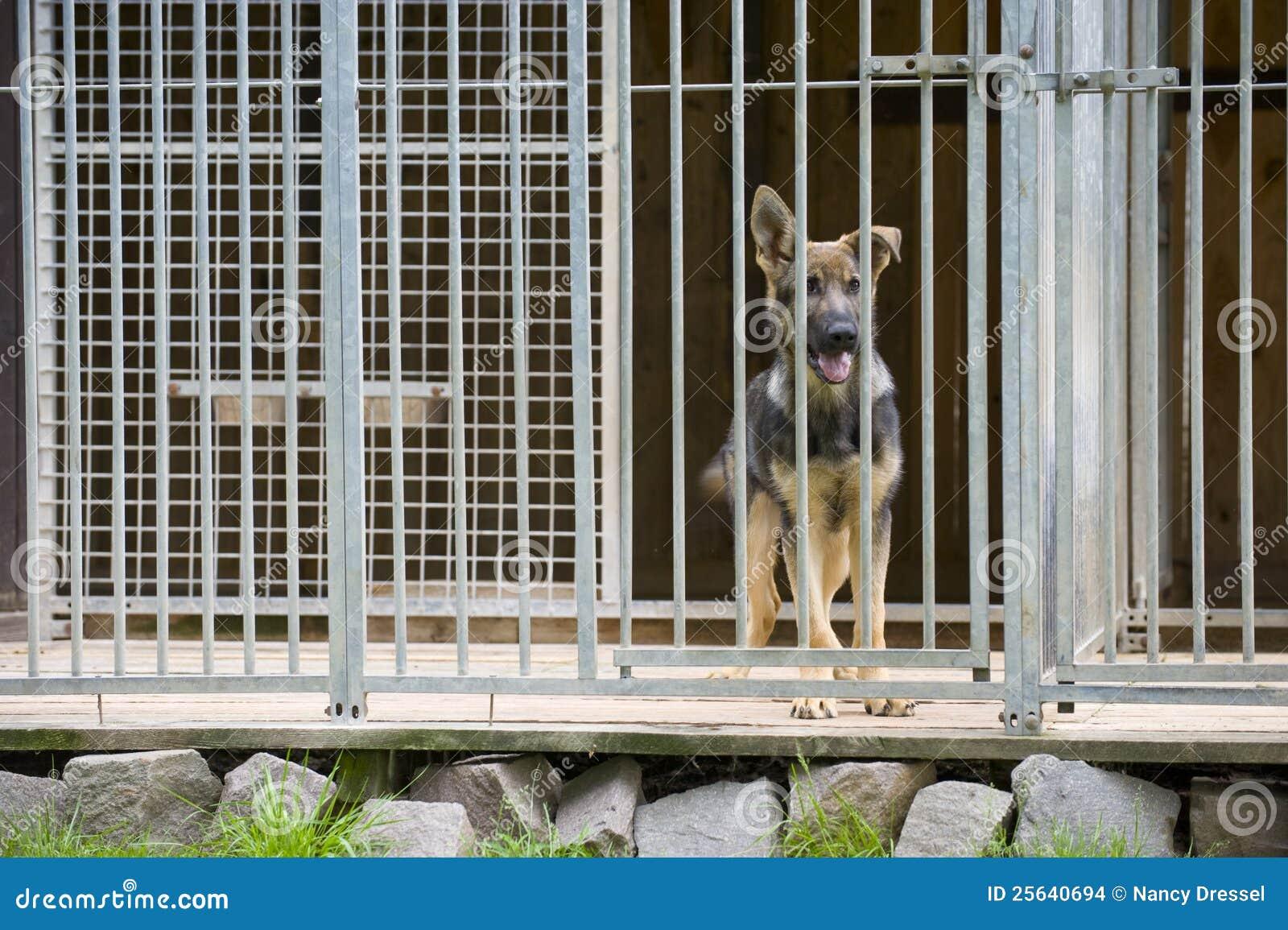 Free Young Large Dog