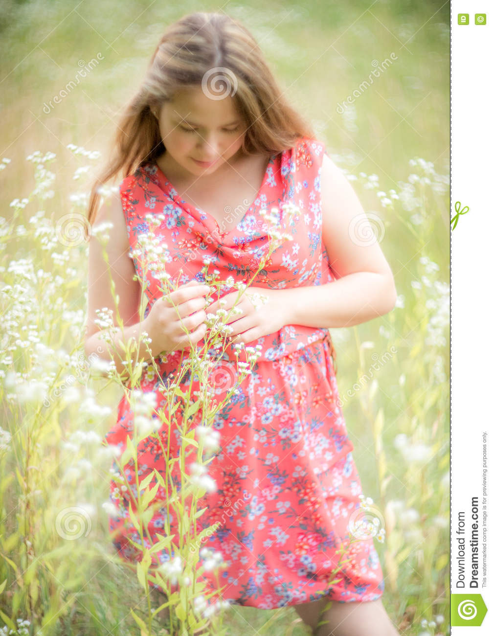 cbf68cbc452 Young Girl Shy Look Down Stock Images - Download 79 Royalty Free Photos