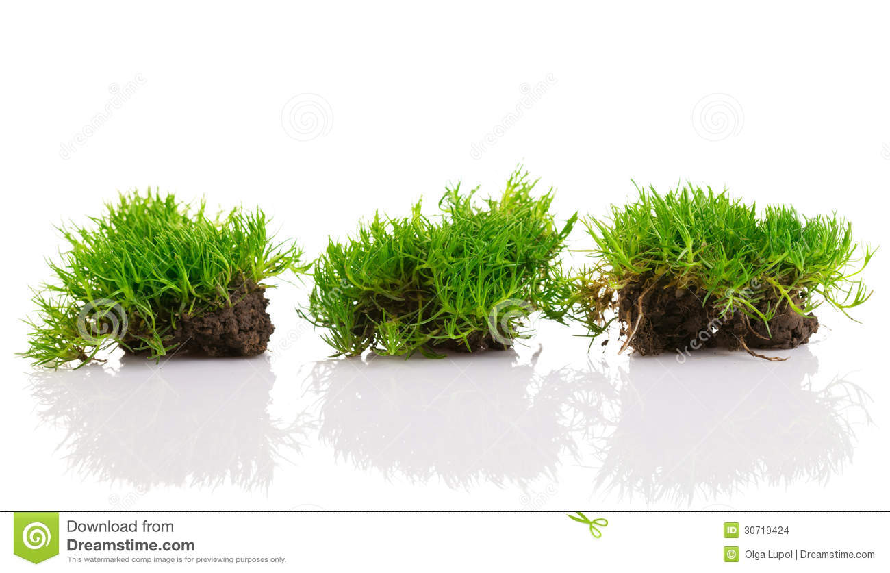 Young green grass with soil stock photo image 30719424 for Soil and green