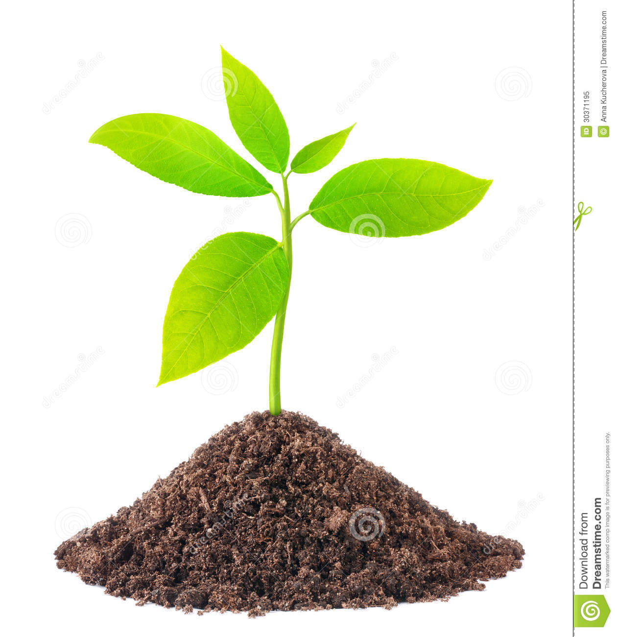 Young green plant stock image image of nature subtle for Soil and green