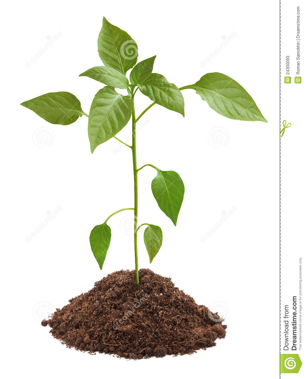 Young green plant in soil stock photos image 24300093 for Soil and green