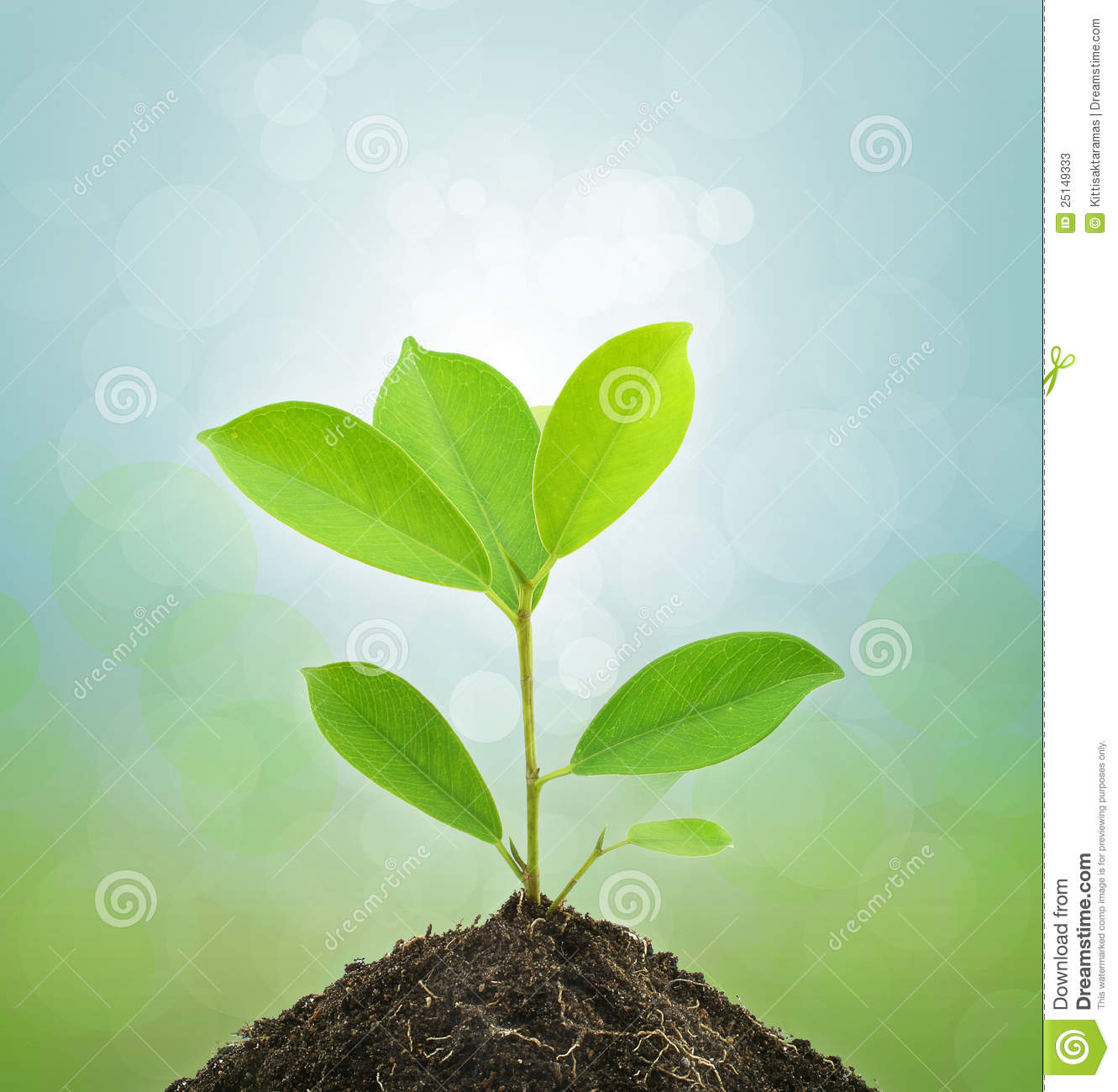 Young green plant and soil stock photos image 25149333 for Soil and green