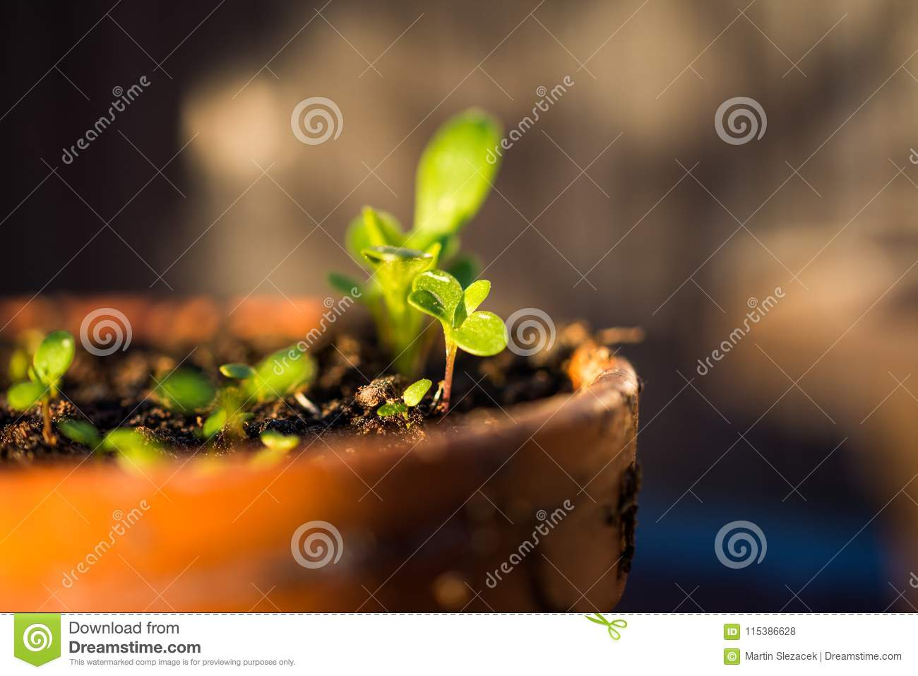 Young Green Plants Are Growing In The Pot. Fresh And Helth Leafs ...
