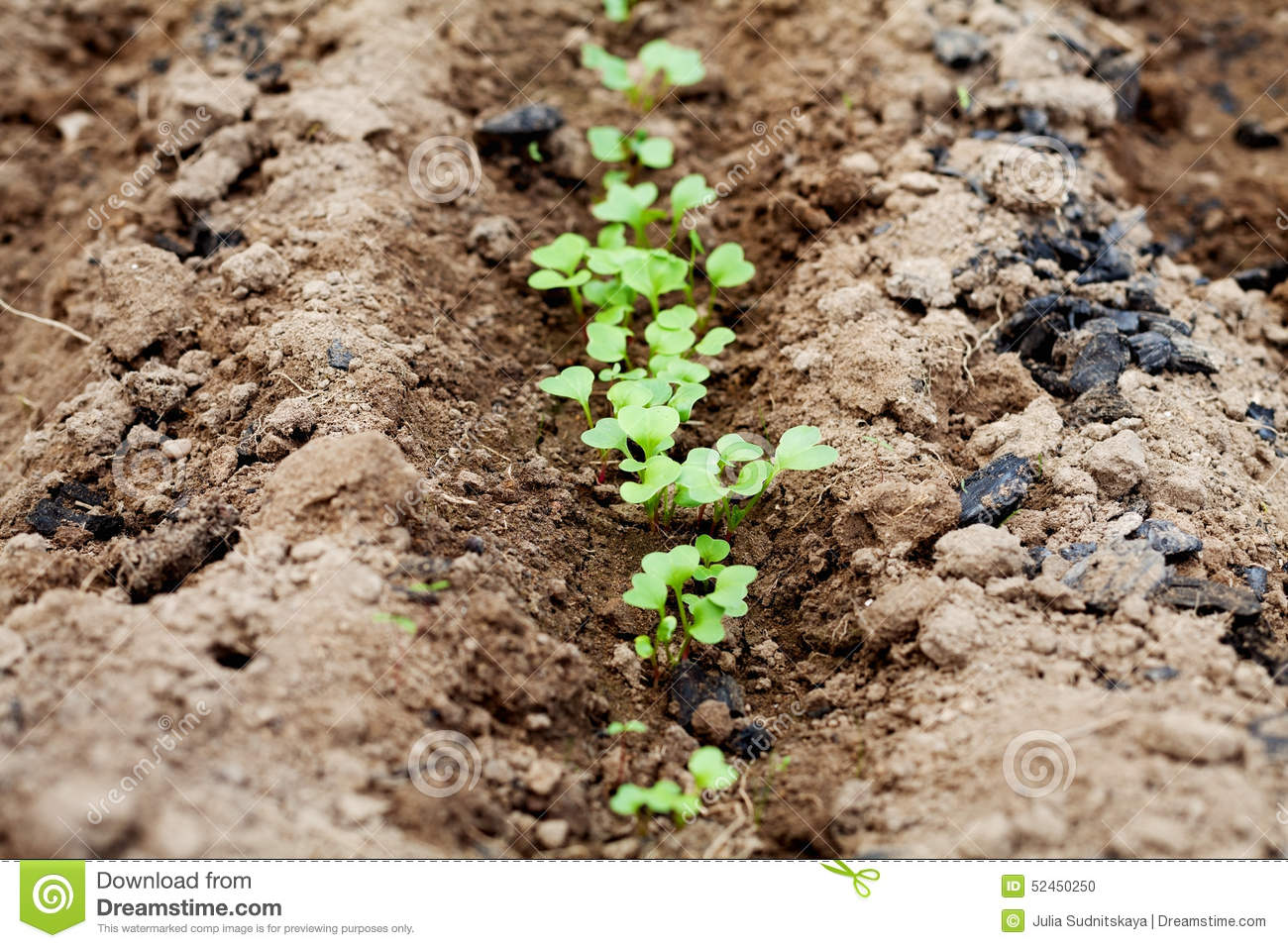 Young green sprout in the soil or ground spring bed of for Soil young s modulus