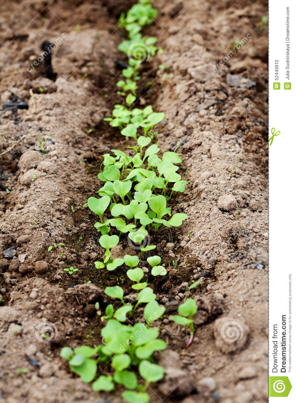 Young green sprout in the soil spring bed of new crops for Soil young s modulus