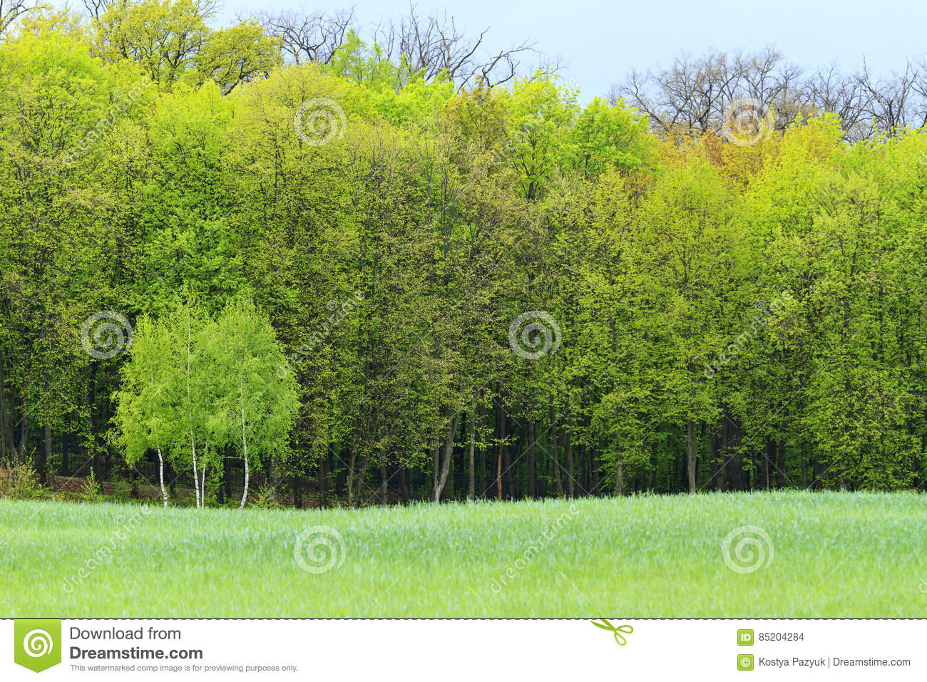 Young Green Trees On A Background Of The Old Spring Forest Stock ...