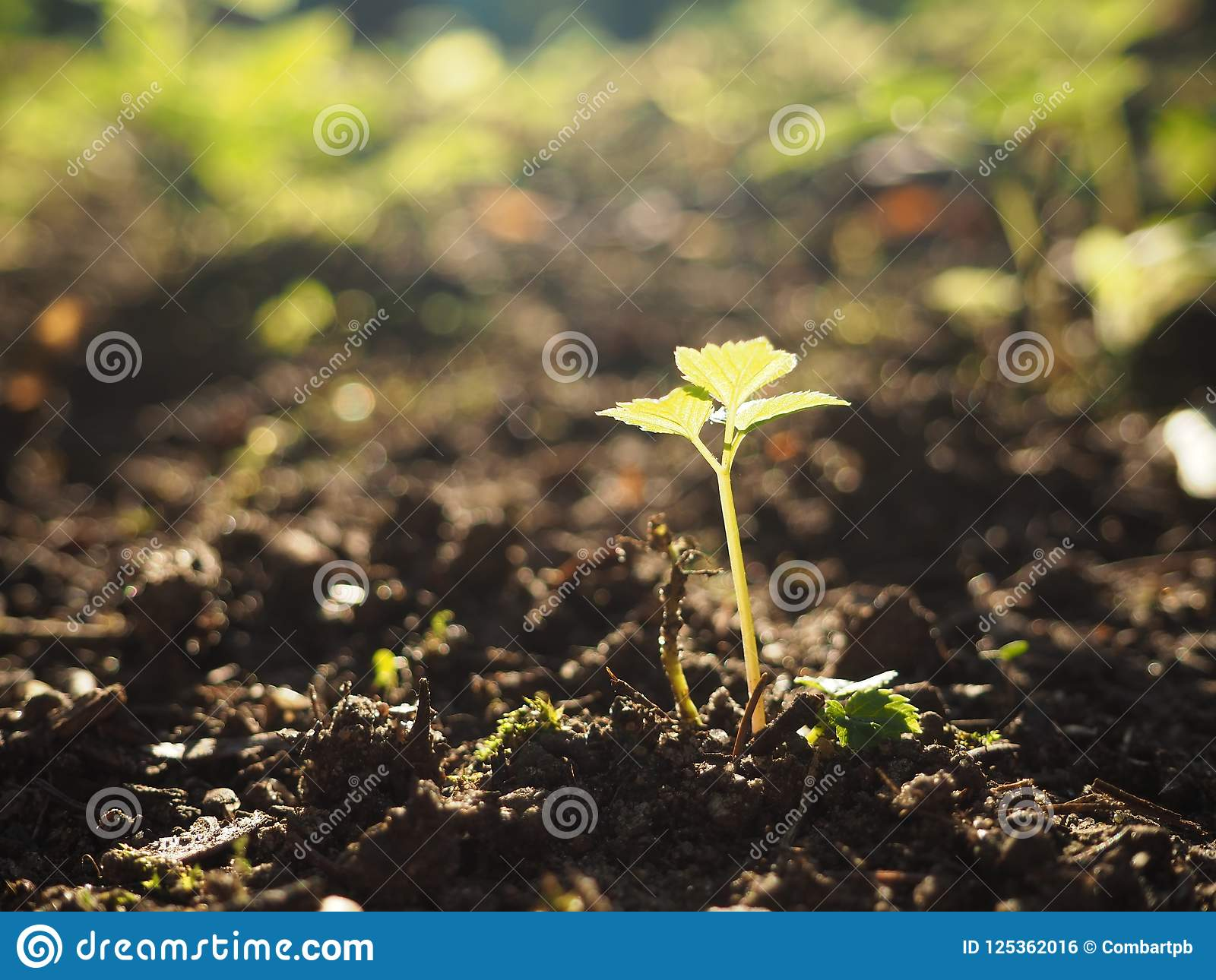 Young Growing Plant On A Sunny Background Stock Photo