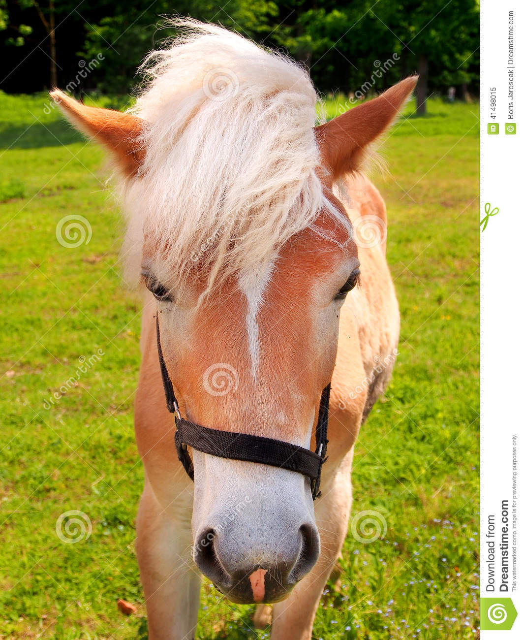 Young horse on green field