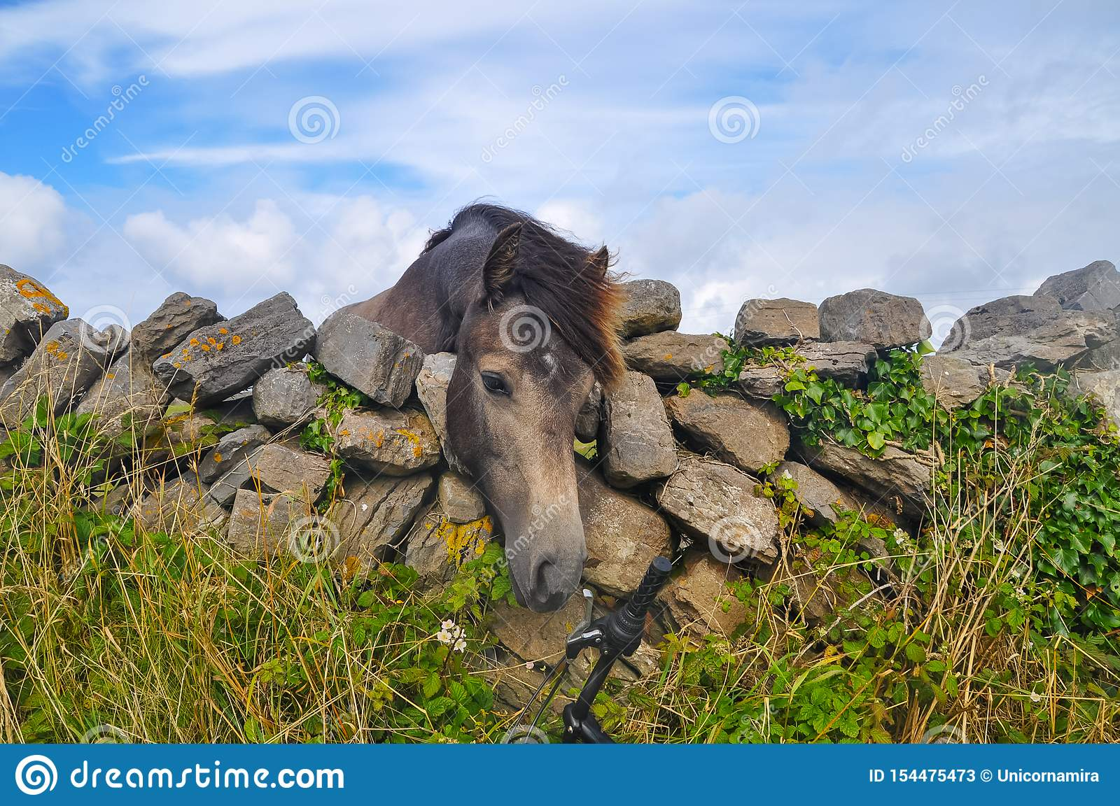 Young Horse`s head close up, curious animal drawing it`s nose to bicycle over stone fence