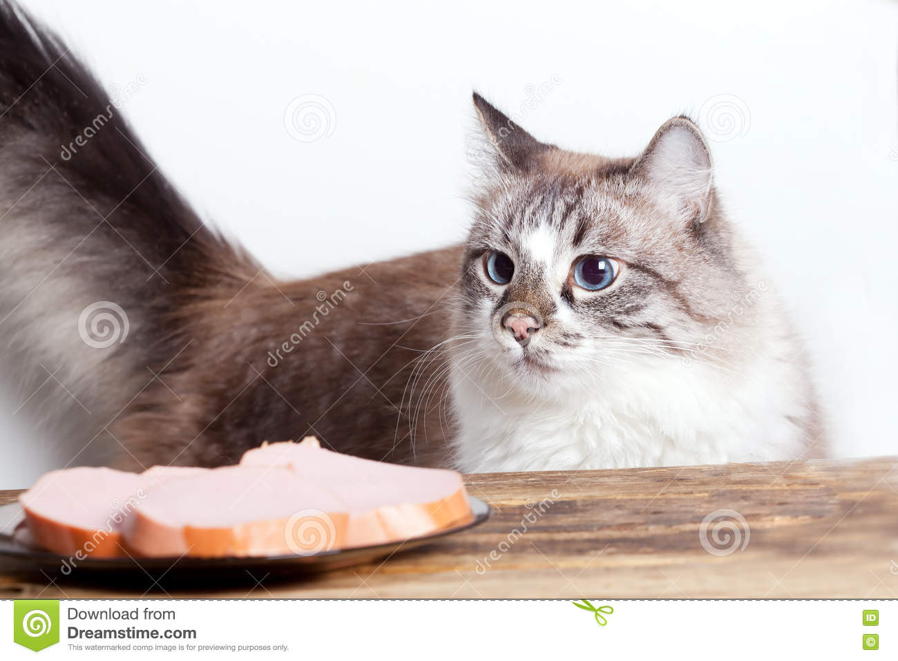Young hungry cat