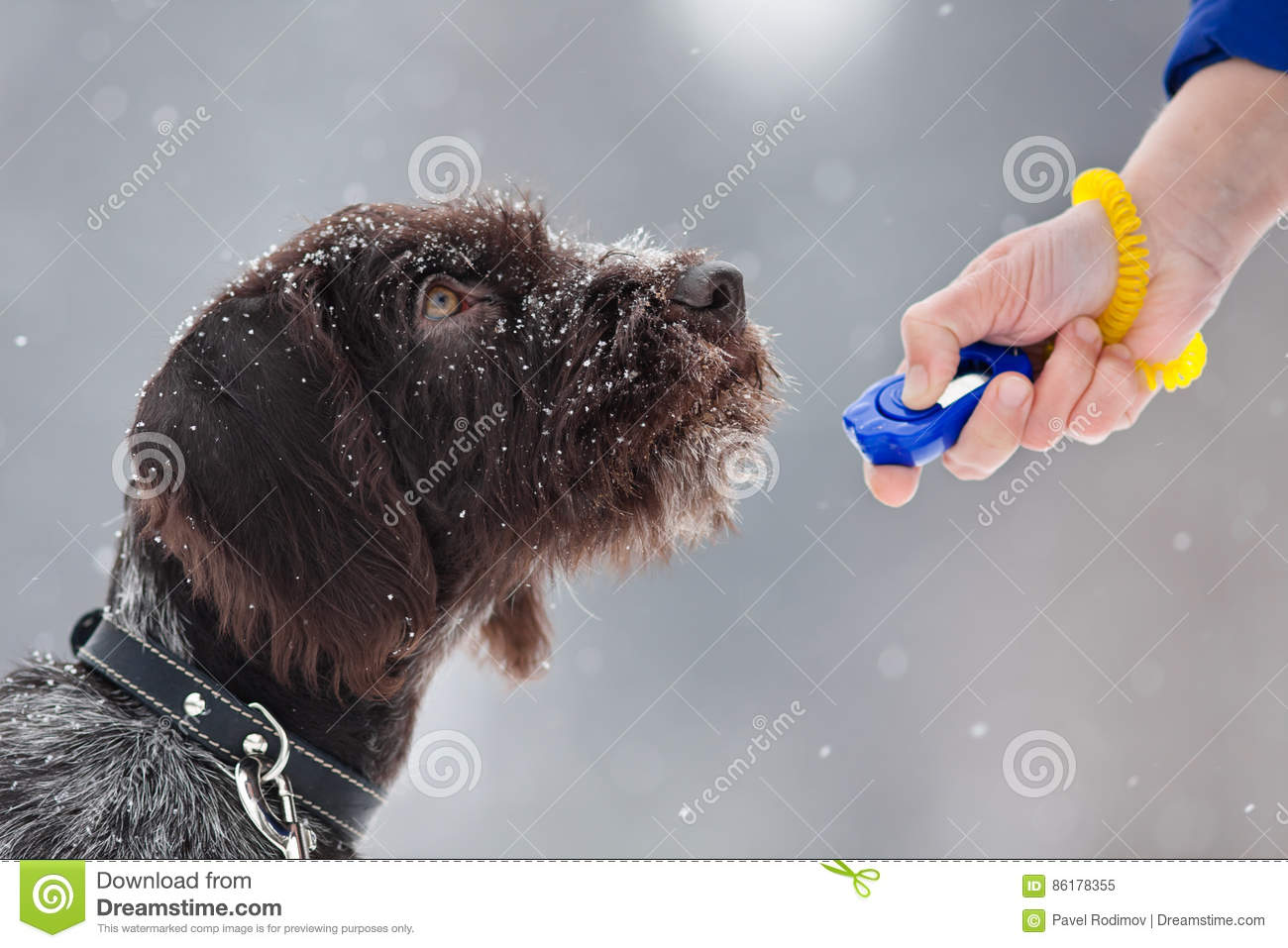 How To Make A Dog Clicker At Home