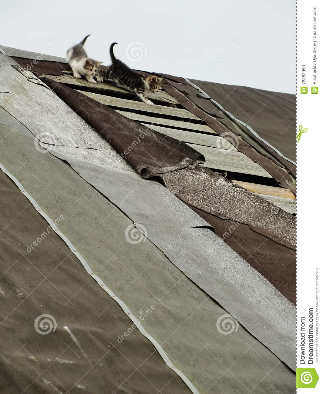 Young inexperienced shy wild kittens on the roof of an old rustic barn. A pair of pitiable homeless small cats.