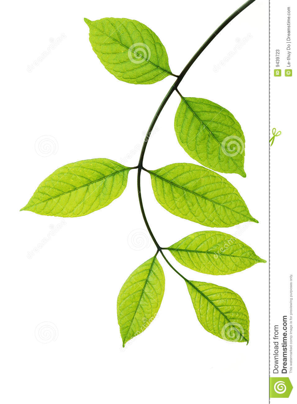 Young leaf photo nude sex hentai pic