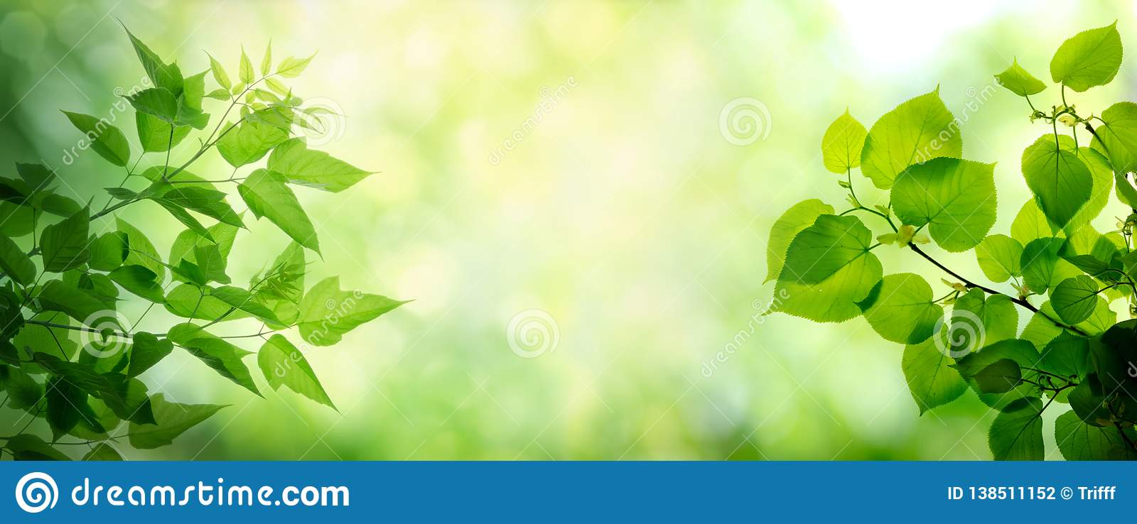 Young leaves on the branches of maple and lime tree. Spring and summer background