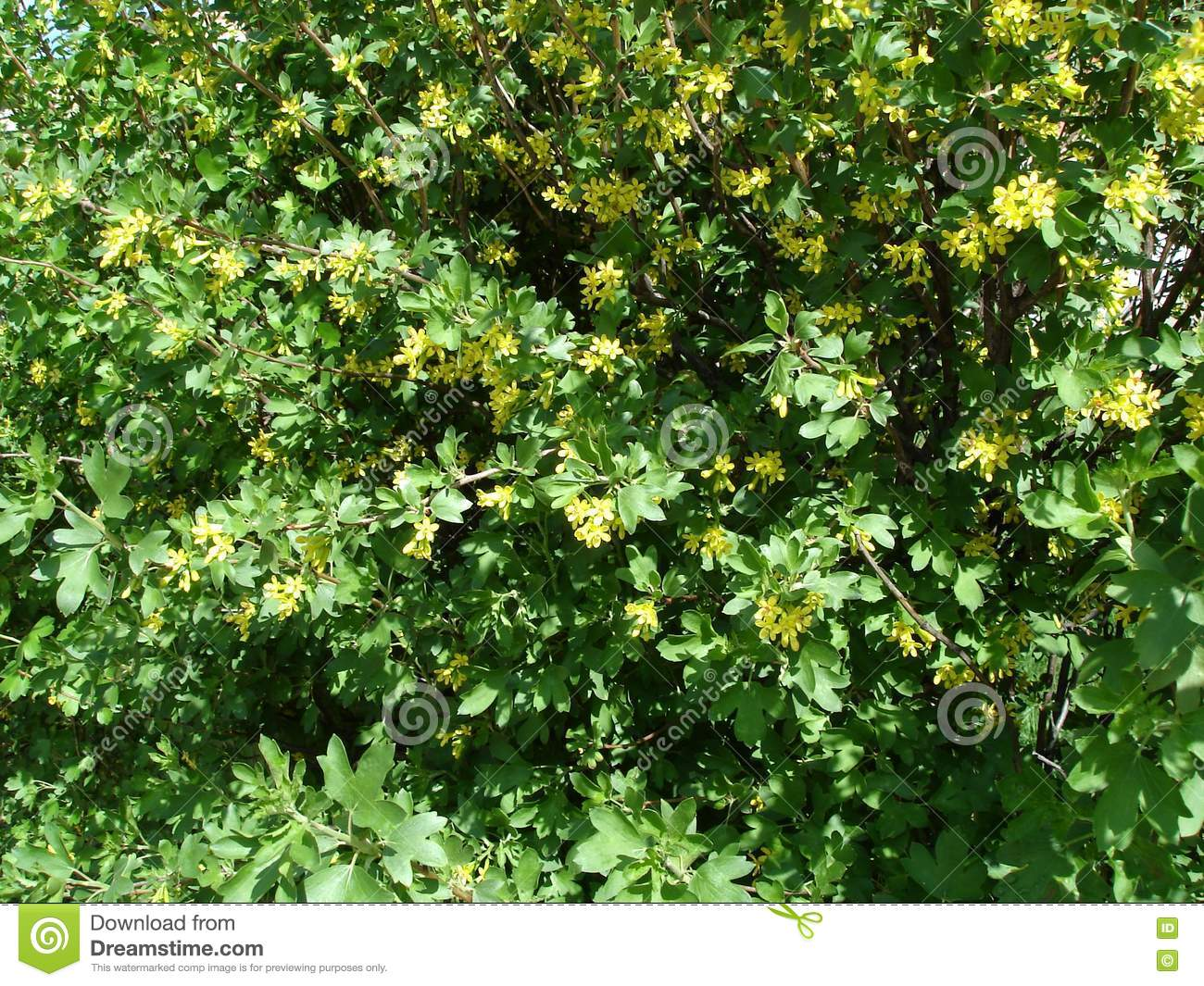 Young Leaves And Yellow Flowers Springtime Background Stock Photo