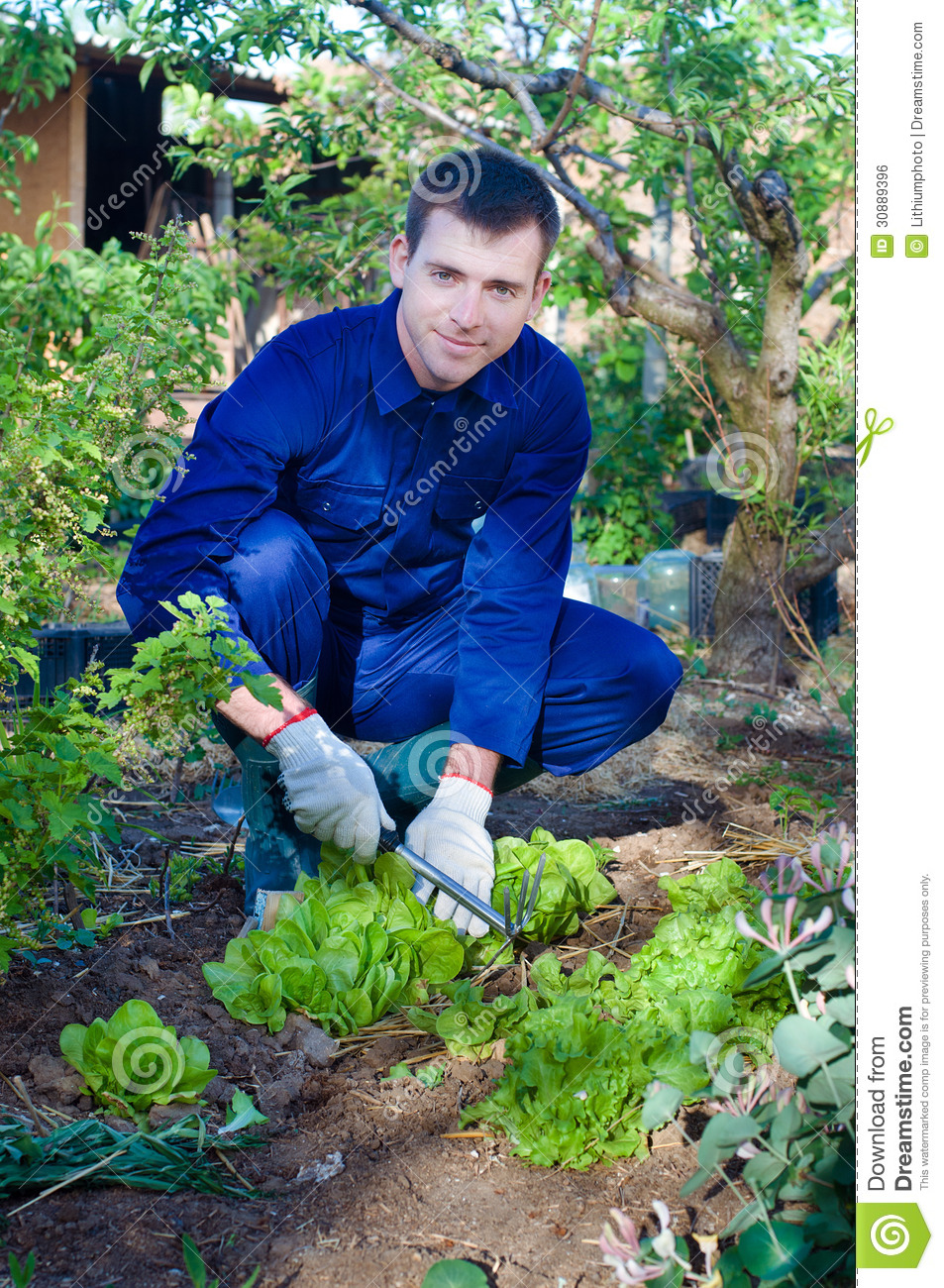 Young man raking soil near salad royalty free stock image for Soil young s modulus
