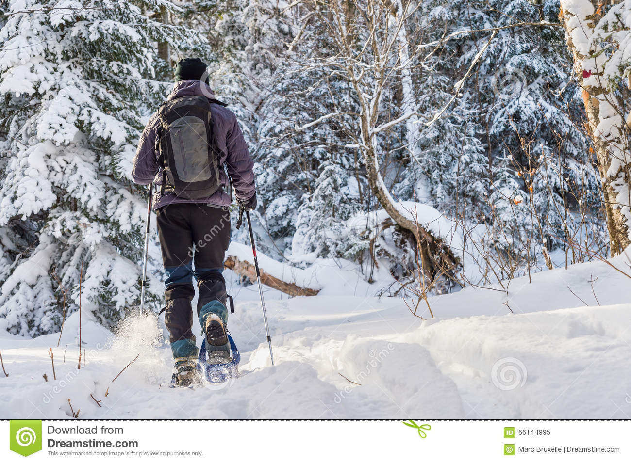 Young man snowshoeing in winter, in the Quebec eastern township
