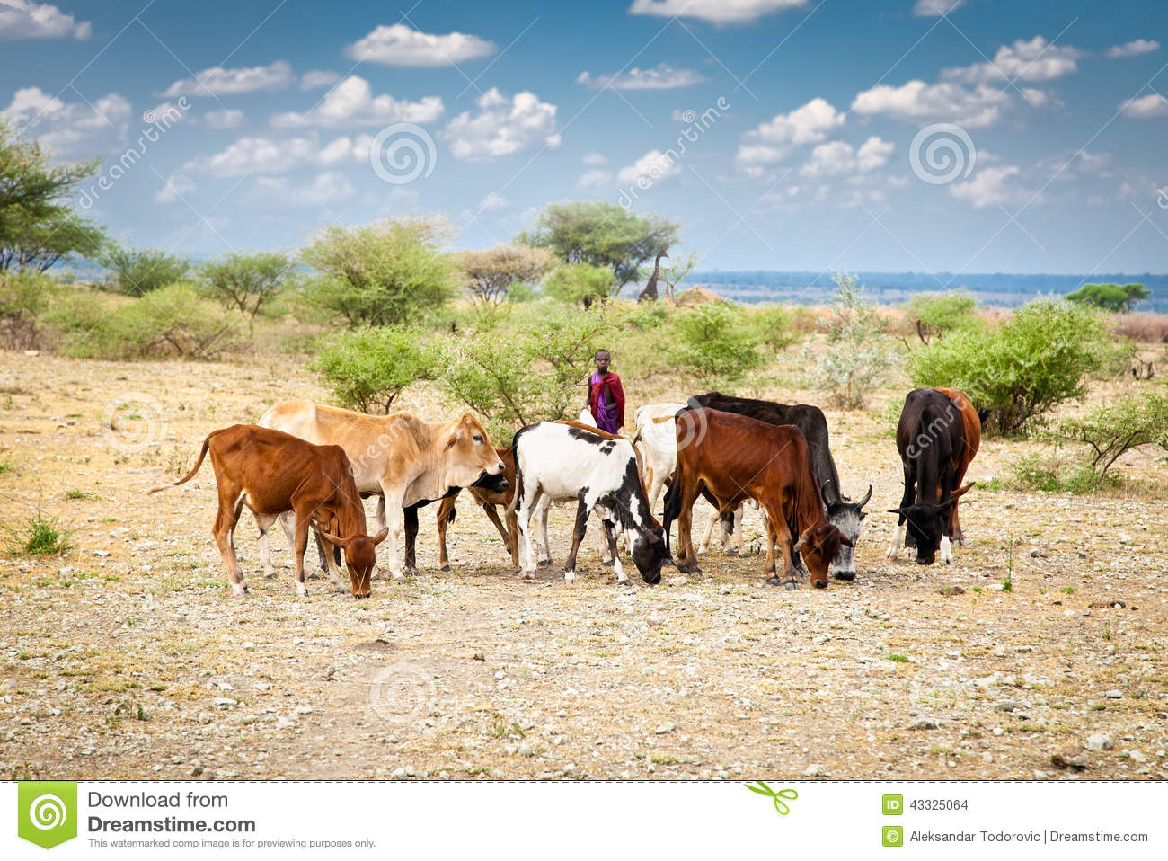 Kenyan People And Culture Young Masai Herders An...