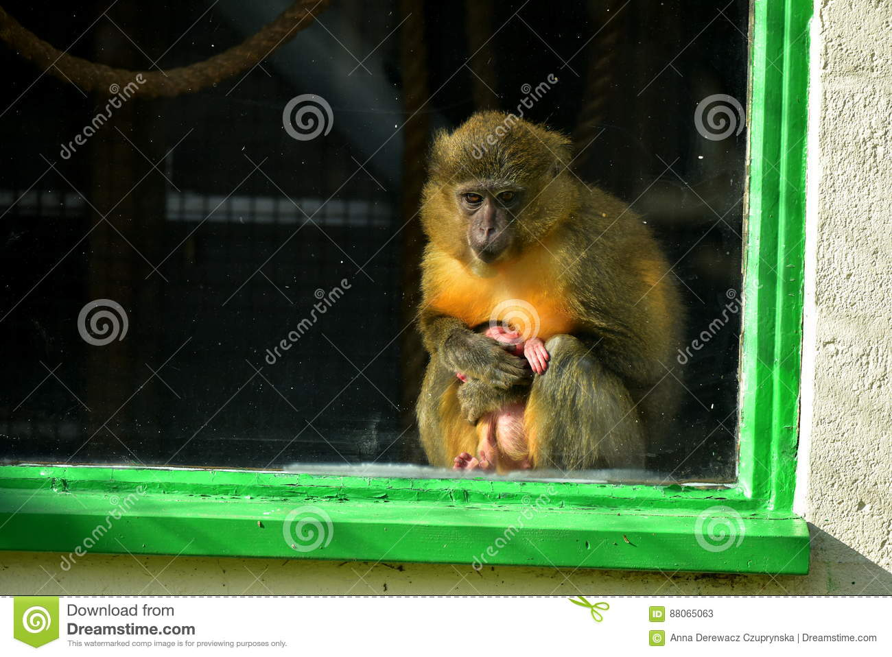 Monkey Cum Porn - Free Studentin Stockings Tube selects HD Porn Movies so carefully, usually  ready cum long before go halfway through dirty video capuchin everyone.