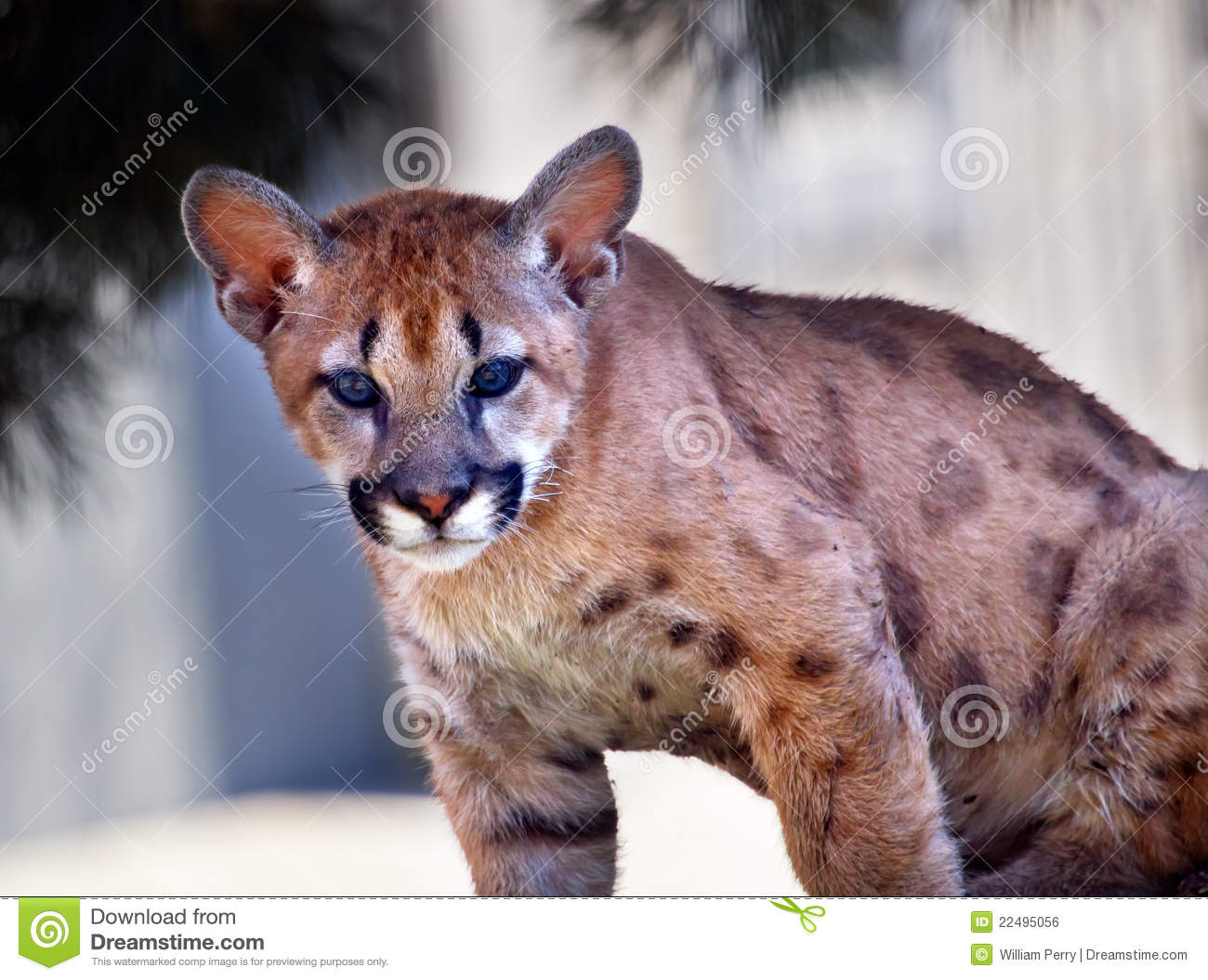 And cougar young I'm a