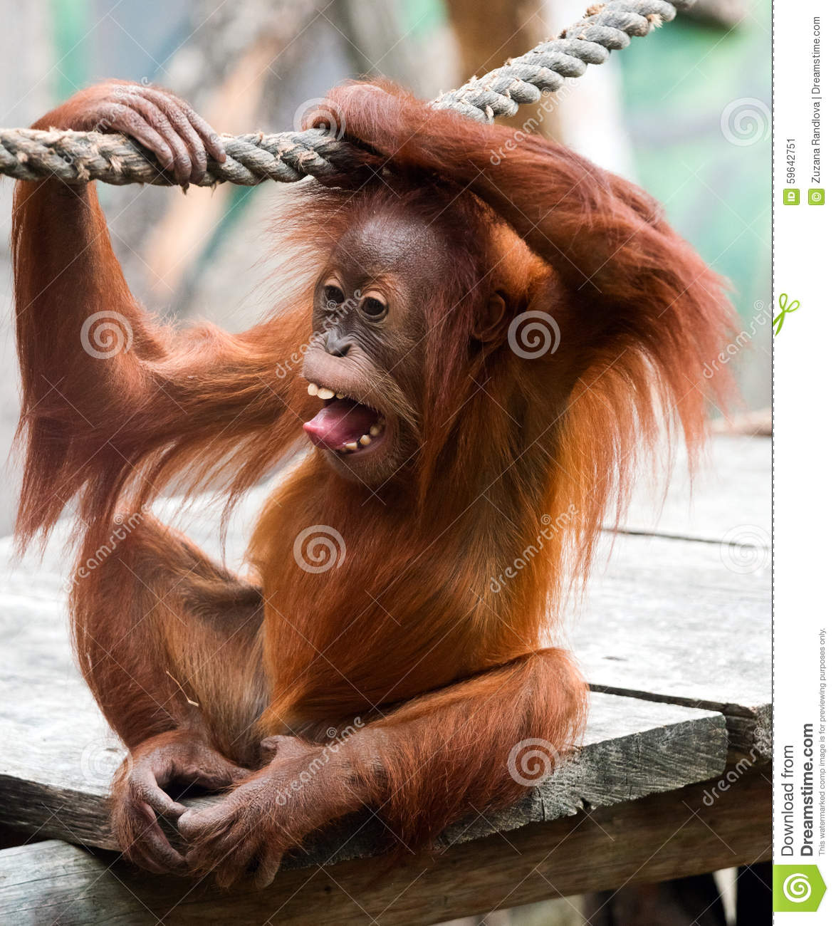 Sex orang utan sex girl