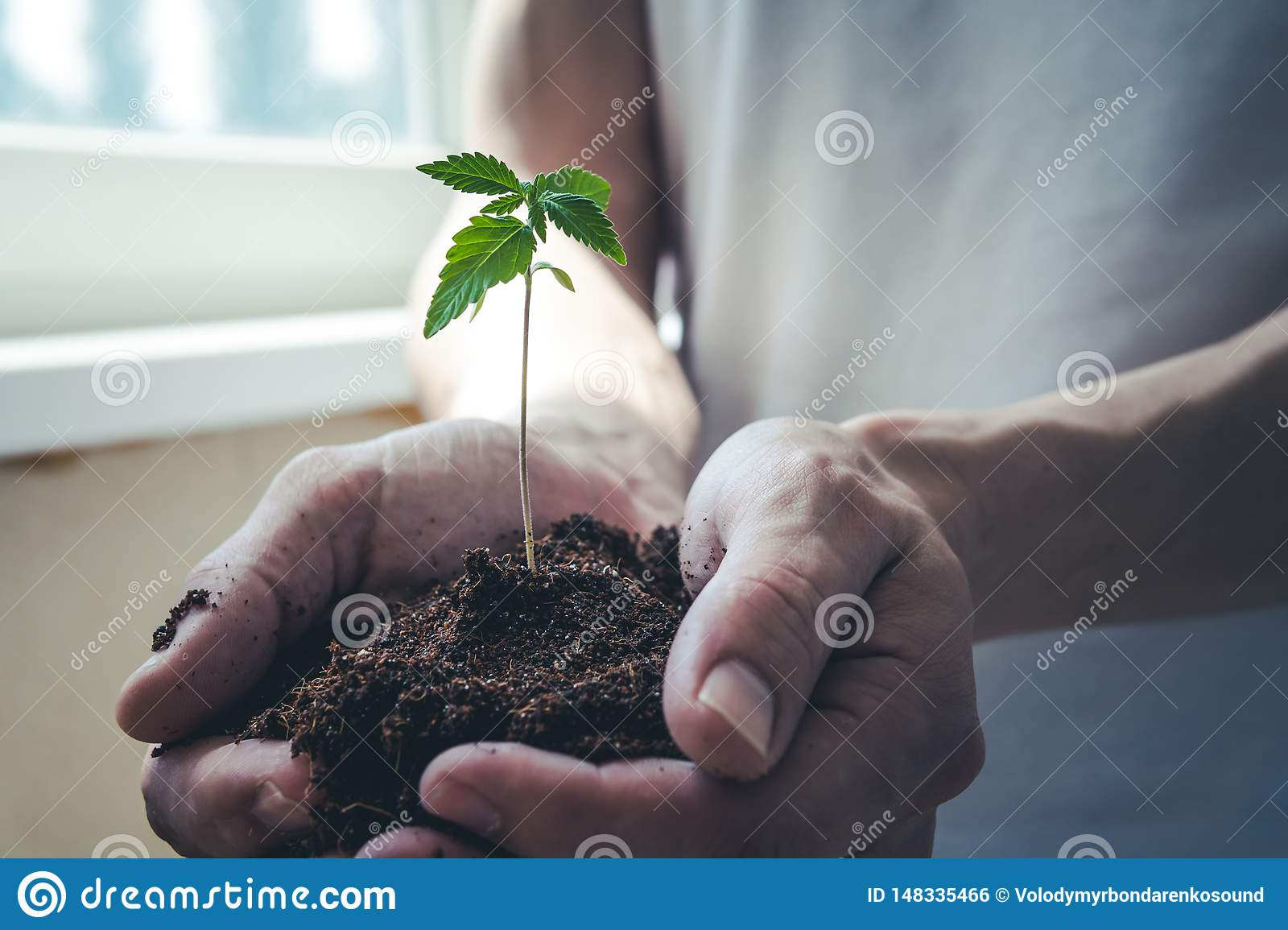 The young person hold in his hand sprout of medical marijuana