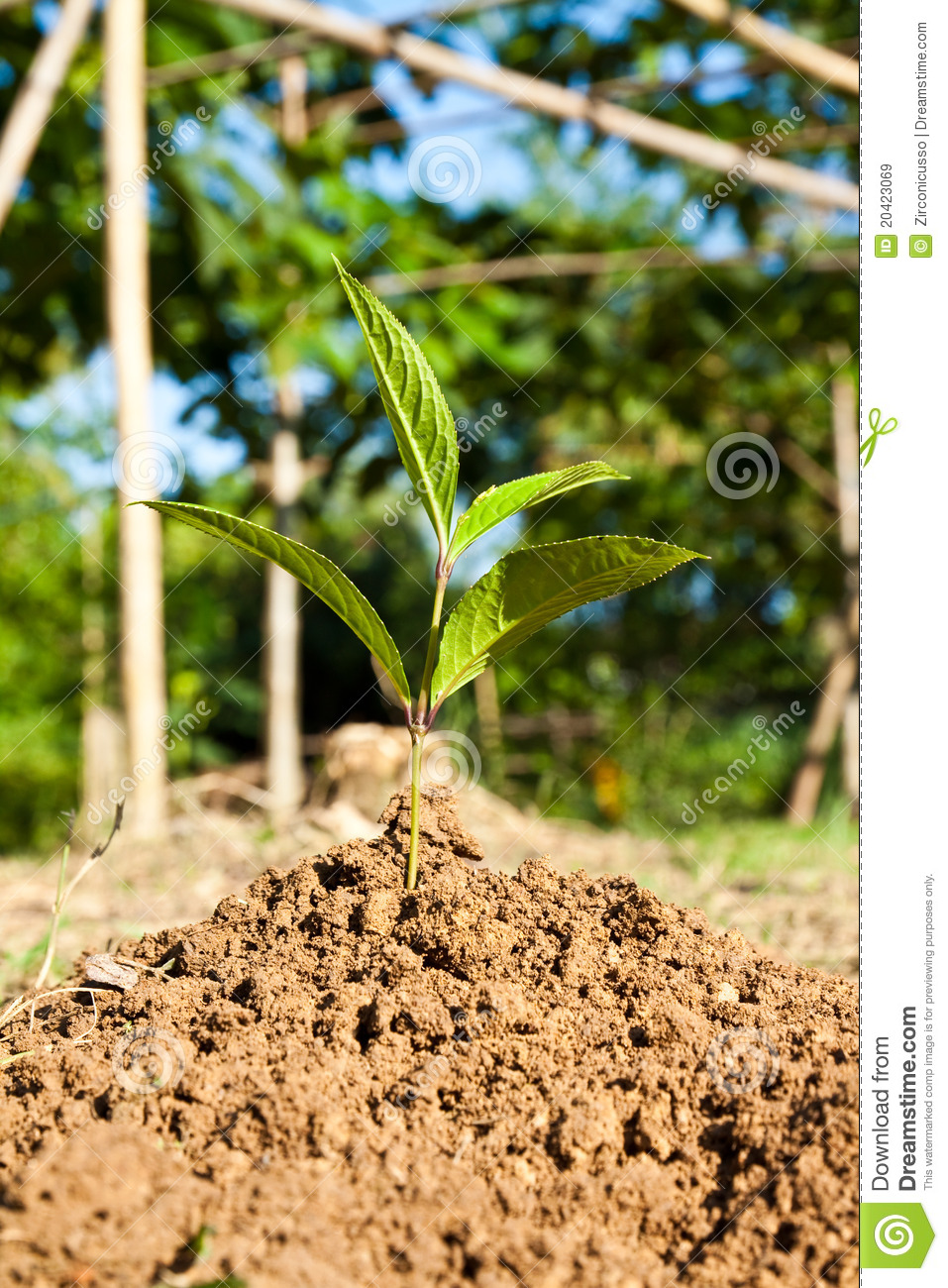 Young plant royalty free stock images image 20423069 for Soil young s modulus