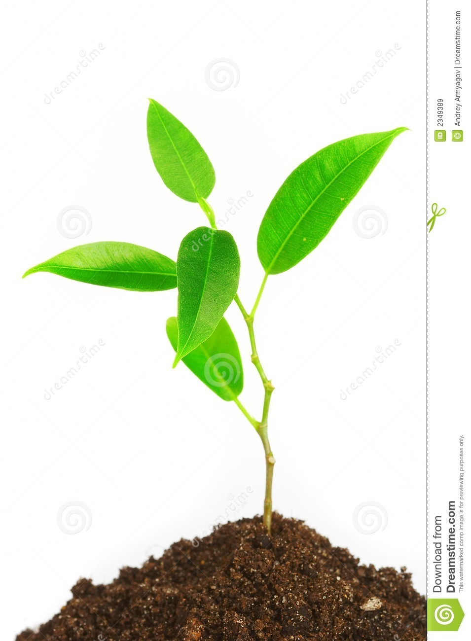 young plant stock image image of medicine healthy