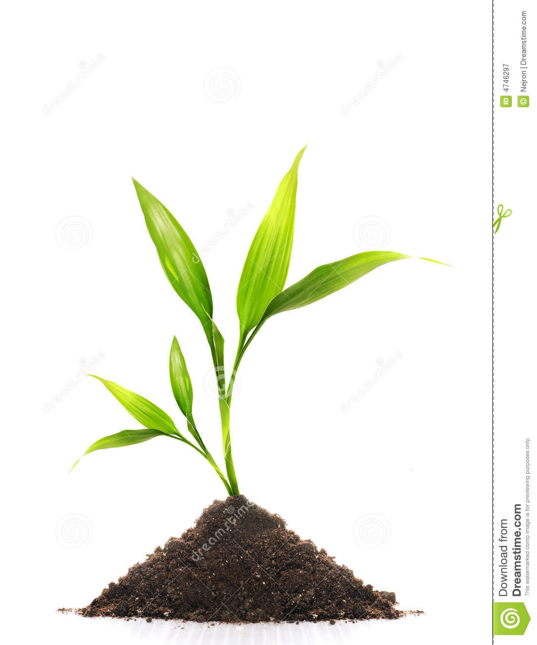 Young Plant Stock Image. Image Of Natural, Green