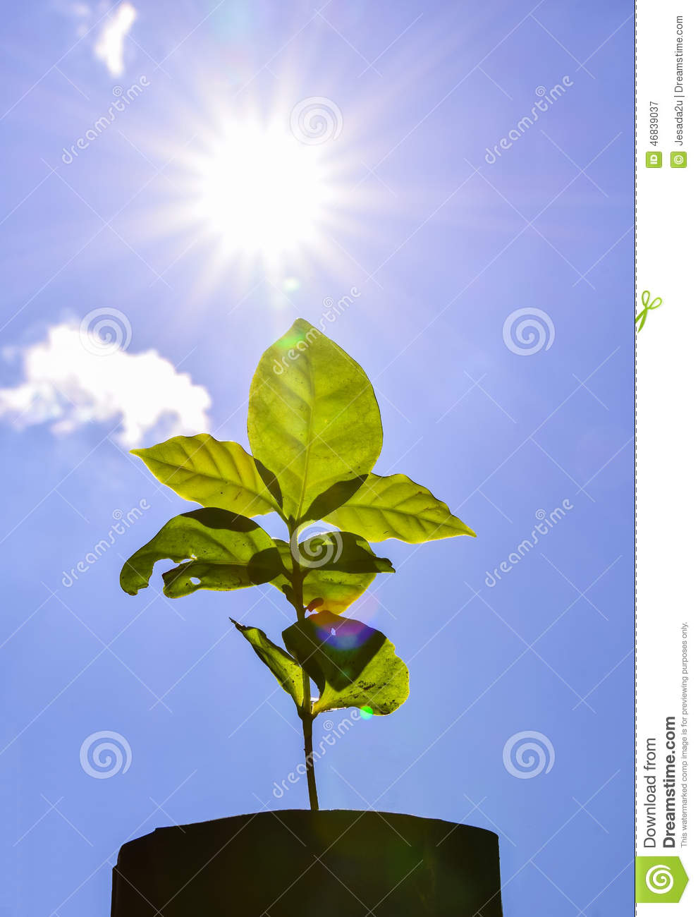 Download Young Plant Fresh New Life  Sun Power Flare Stock Image - Image of leaf, branch: 46839037