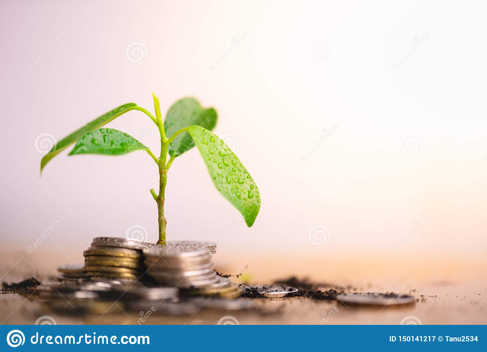 Young plant grow and coins stack.