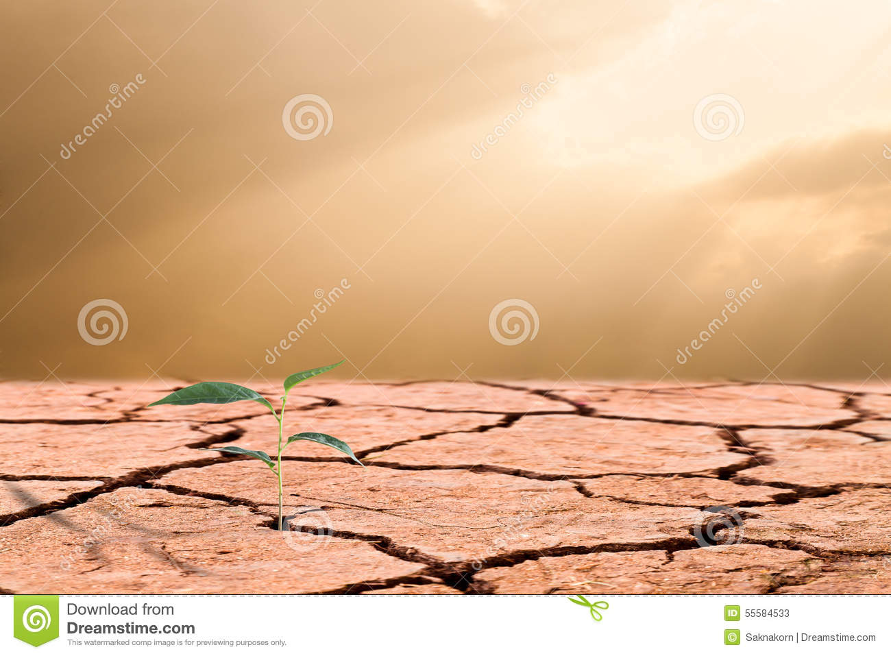 Young plant growing on cracked soil business concept of emergin stock photo image 55584533 - Successful flower growing business ...