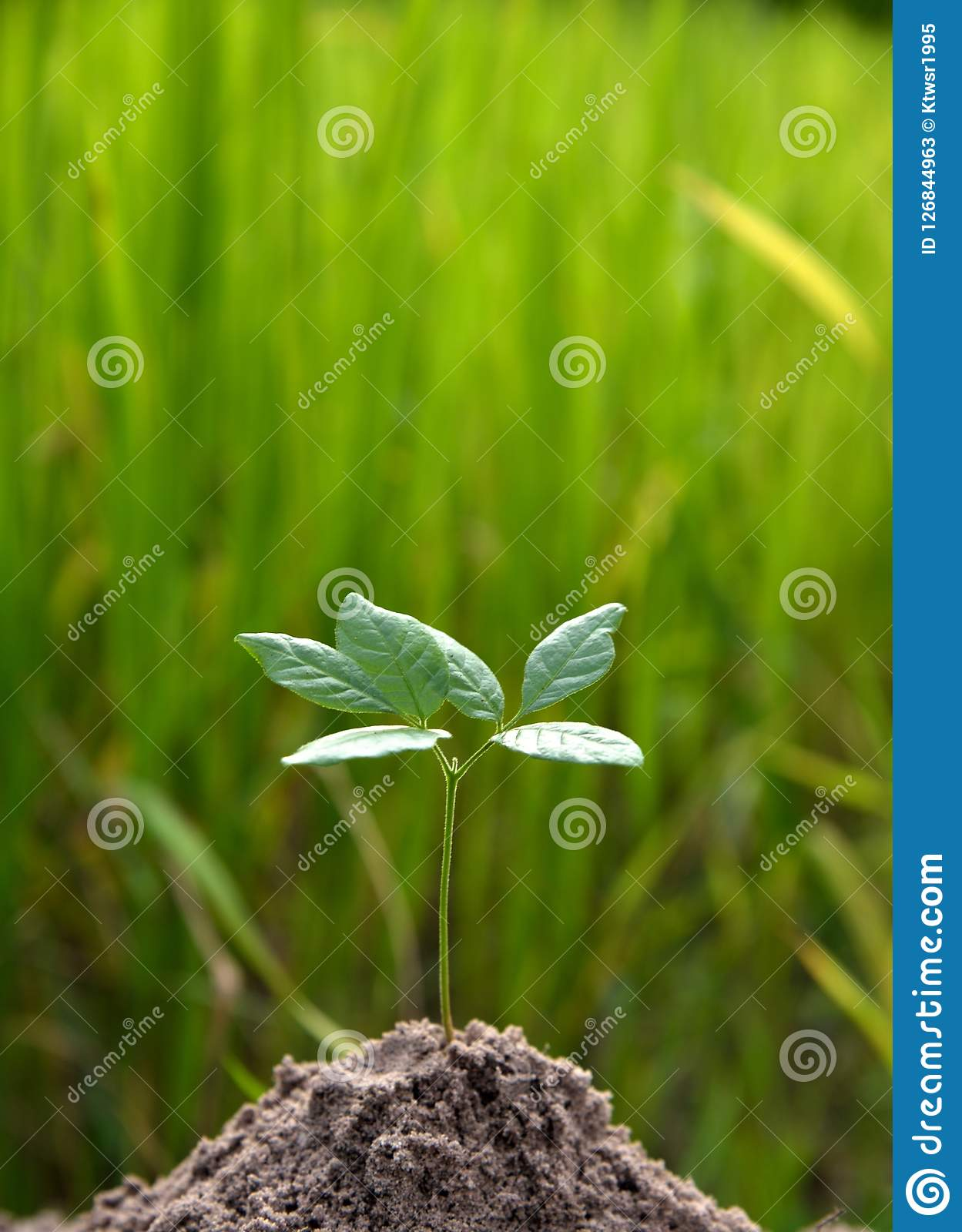 Young plant growing on green earth concept idea. Plant growing in soil on idea growing concept Stock Photos
