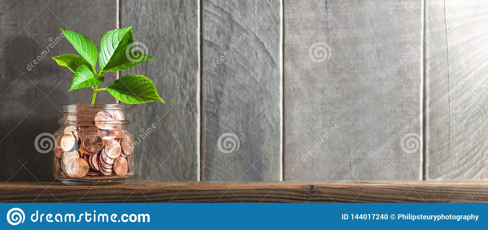 Young Plant Growing Out Of Coin Jar On Shelf With Wooden Background And Sunlight - Financial Growth / Investing Concept