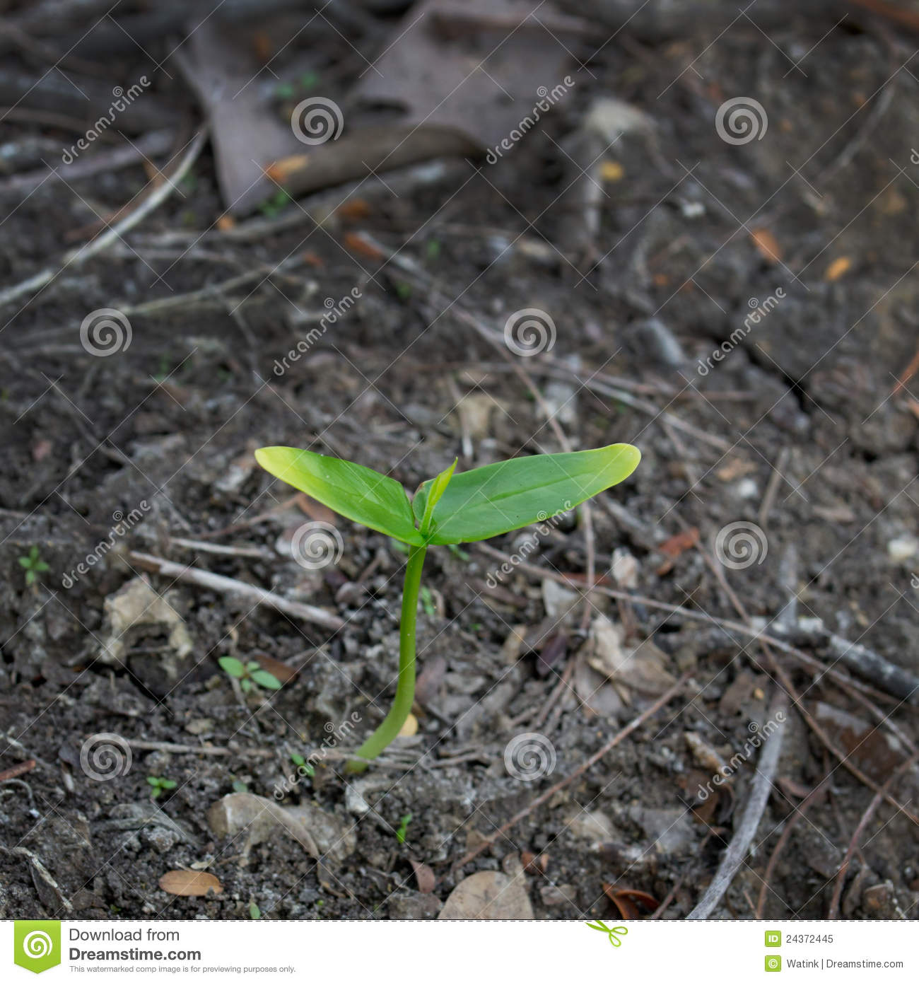 Young plant growth in soil royalty free stock photo for Soil young s modulus