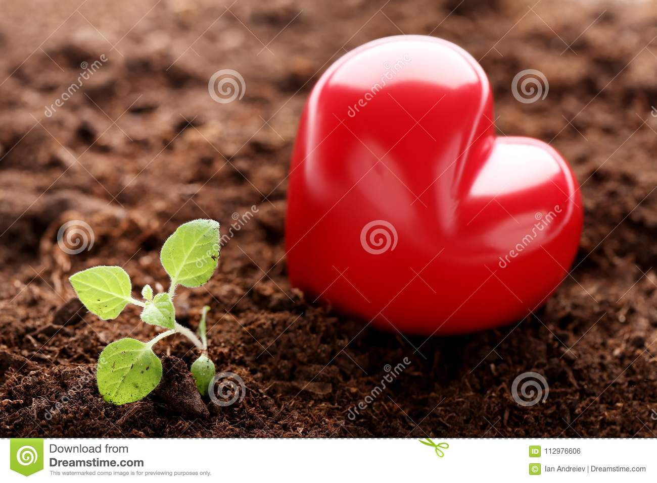 Young plant with heart