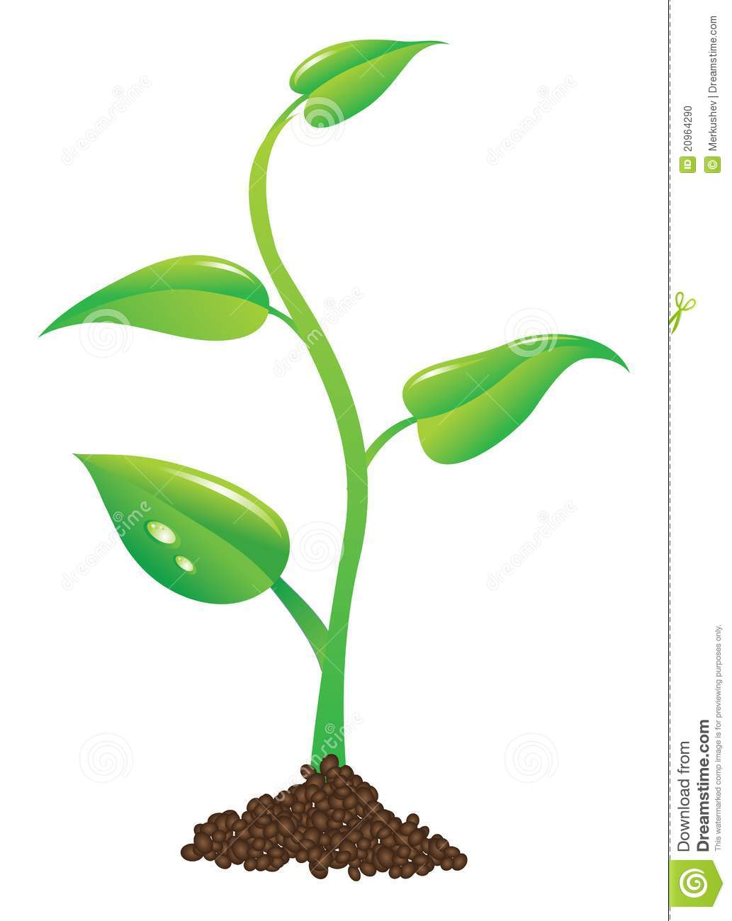 Young Plant Illustration Stock Photo - Image: 20964290