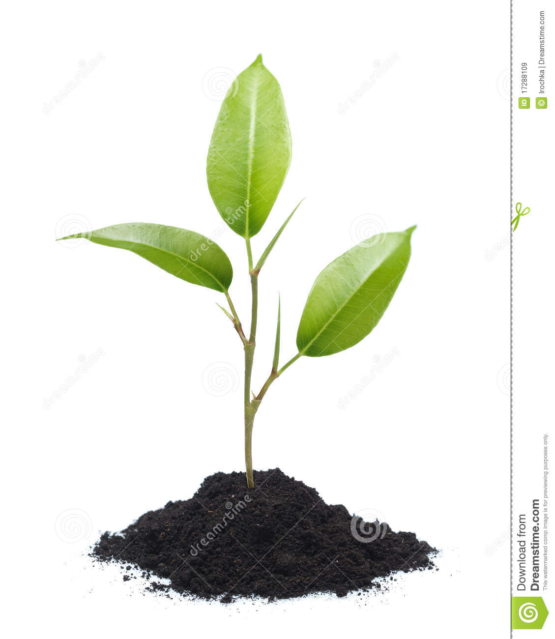 Http Www Dreamstime Com Royalty Free Stock Images Young Plant Isolated Image17288109
