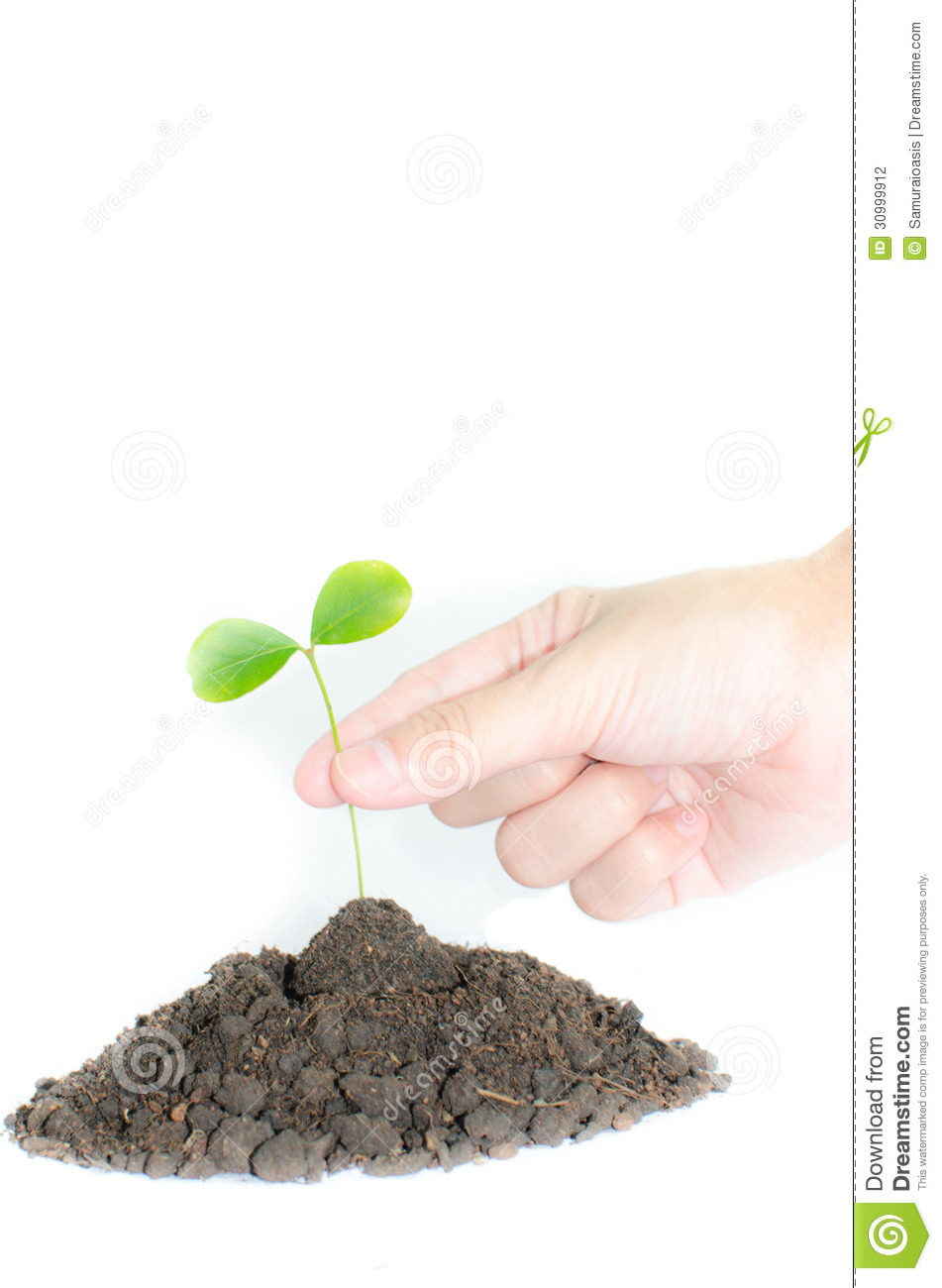 Young plant stock illustration image of botany concept for Soil young s modulus