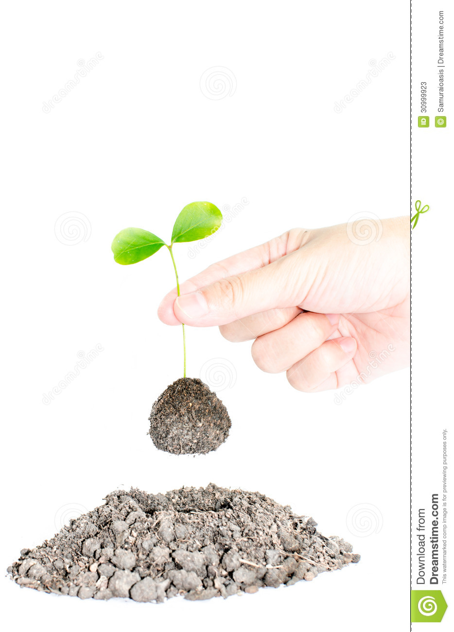 Young plant stock photos image 30999923 for Soil young s modulus
