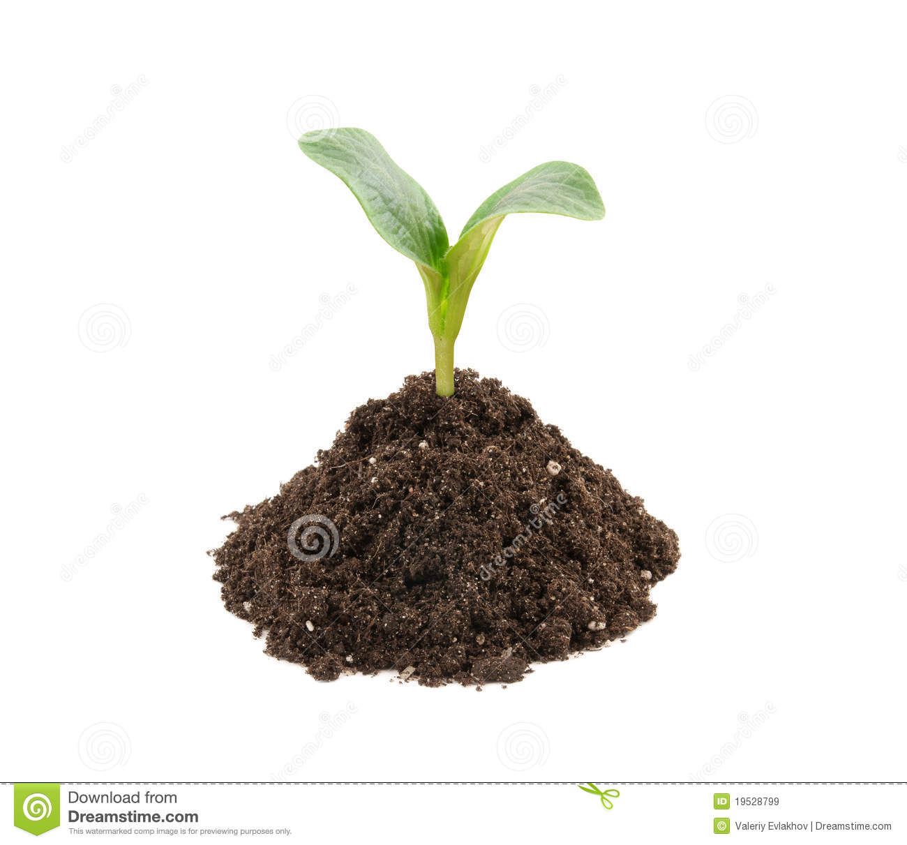 Young plant in soil isolated royalty free stock images for Soil young s modulus