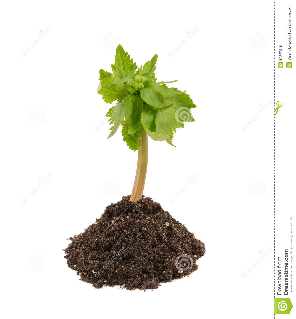 Young plant in soil isolated stock photo image 19577310 for Soil young s modulus