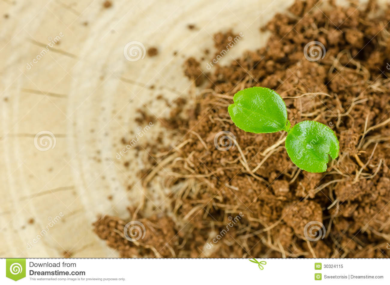 Young plant royalty free stock photo image 30324115 for Soil young s modulus