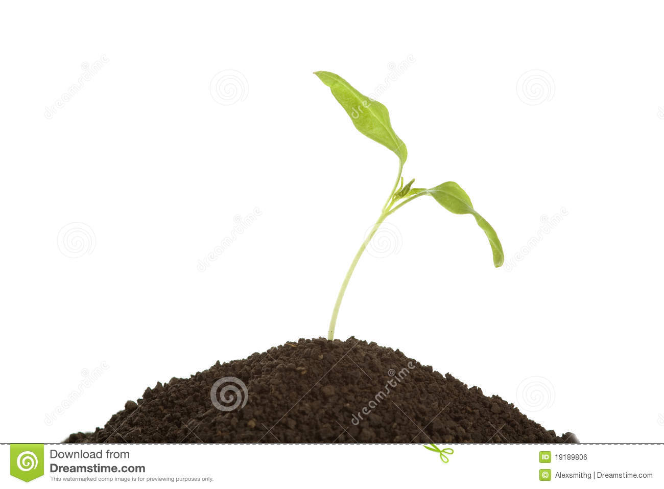 Young plant in soil over white royalty free stock image for Soil young s modulus