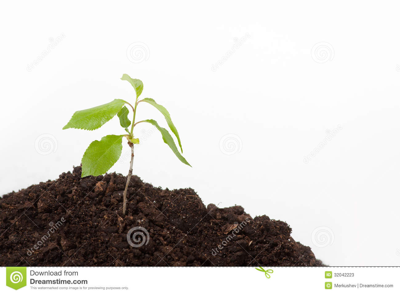 Young plant sprout on the soil stock photos image 32042223 for Soil young s modulus