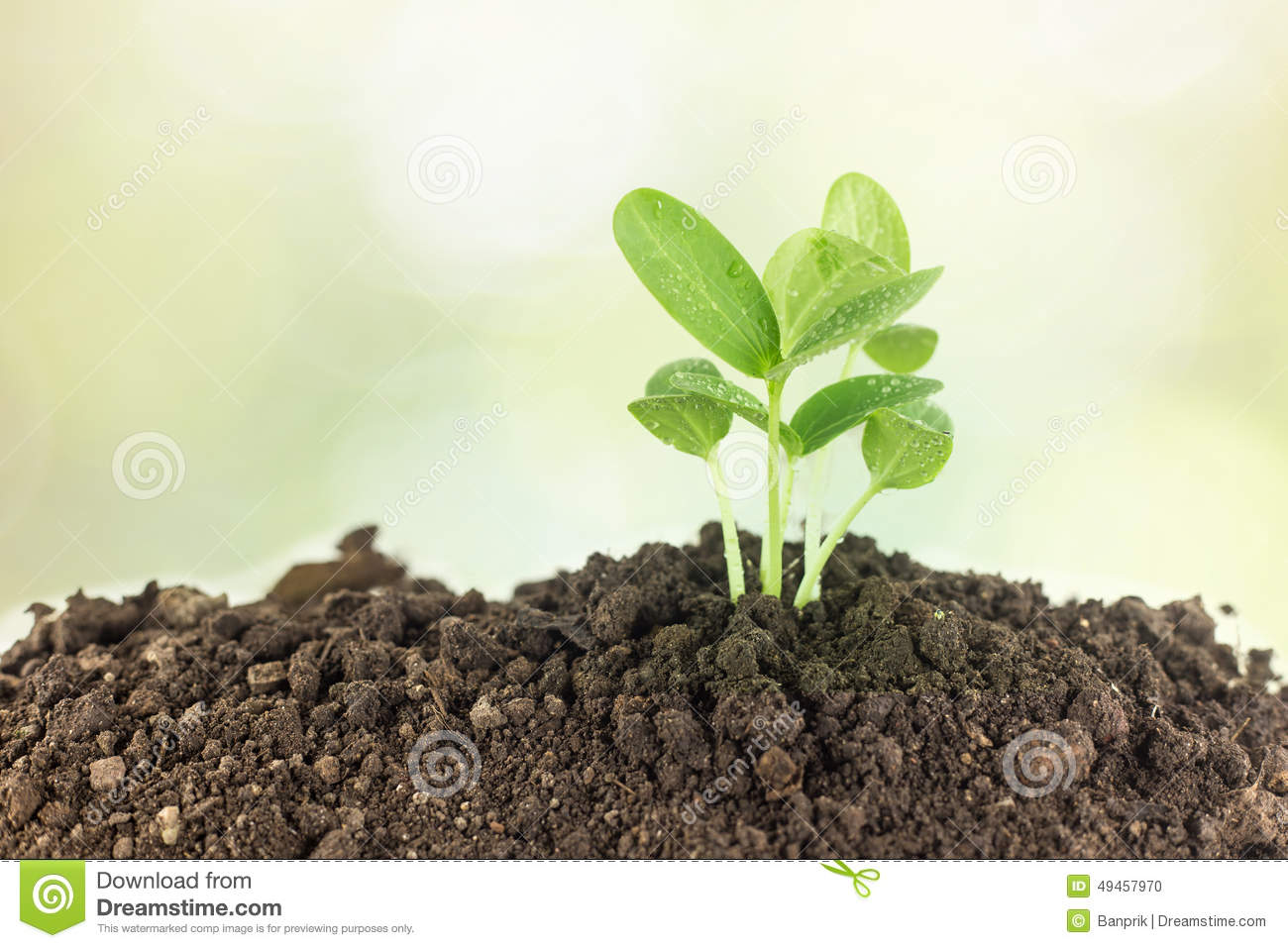 Young plants growing on soil against nature stock photo for Soil young s modulus