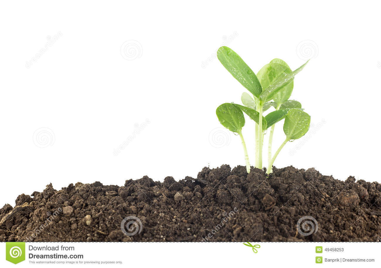 Young plants growing on soil against white stock photo for Soil young s modulus